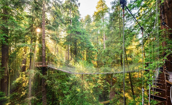 See California's Incredible Redwoods from This New Sky Walk